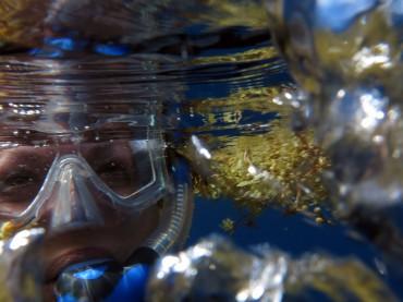 Plongée en mer des Sargasses © Tam Warner Minton  / Flickr