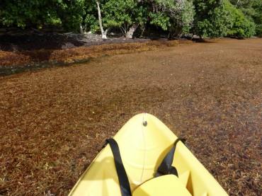 Une balade en kayak peu ragoûtante © Laura  Moreau