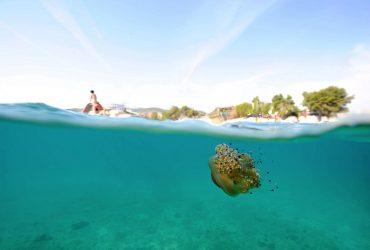jellyfish-cover