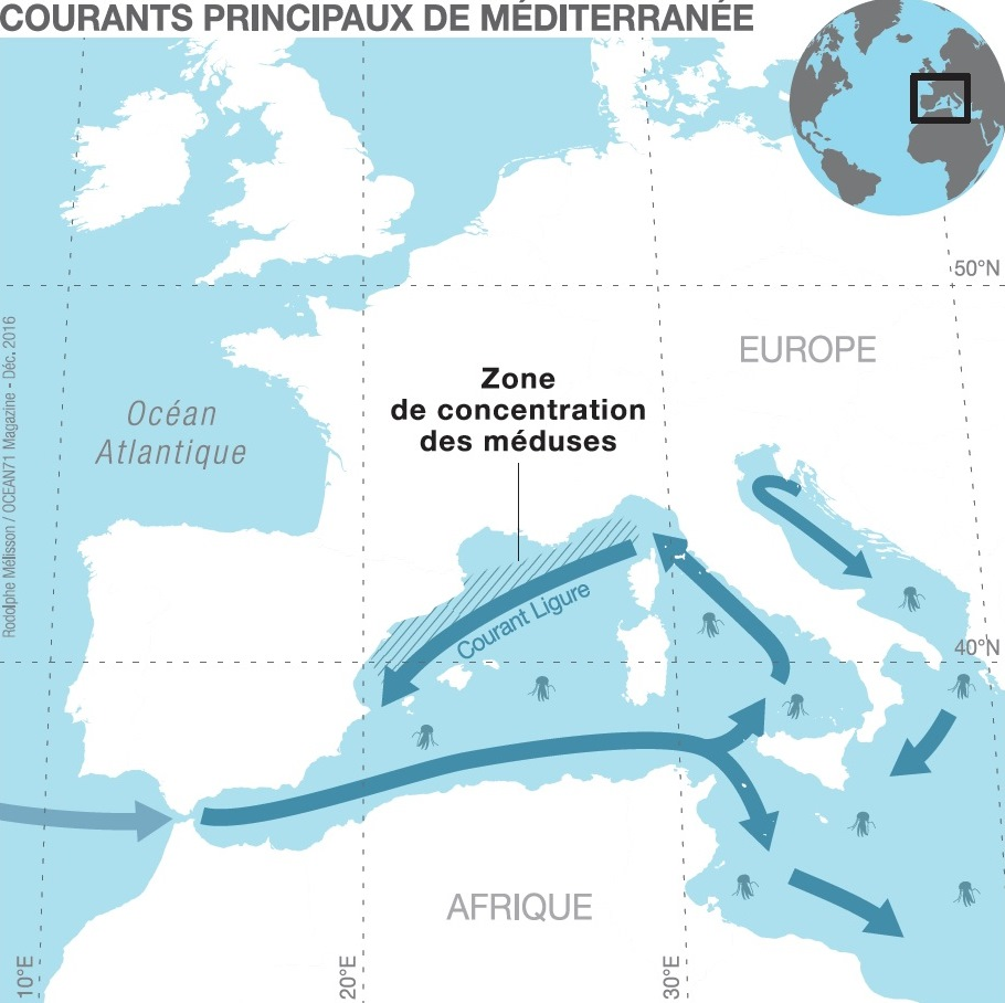 On the contrary, in the western Mediterranean bassin, the main current flows counter clockwise. Jellyfish and the rest of the plankton is concentrated on the edge of the Ligurian current © Rodolphe Mélisson / OCEAN71 Magazine