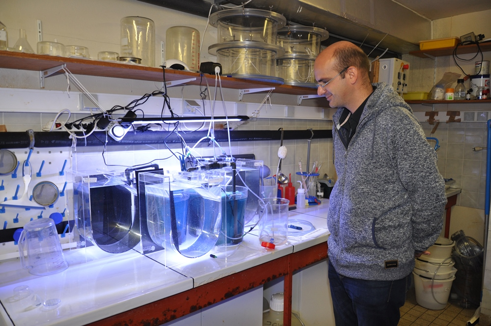 In the historical building of the Oceanological Observatory of Villefranche-sur-Mer, many rooms were transformed into laboratories. Fabien Lombard is checking on a few specimens of Pelagia noctiluca that swim in a specific aquarium © Andy Guinand / OCEAN71 Magazine